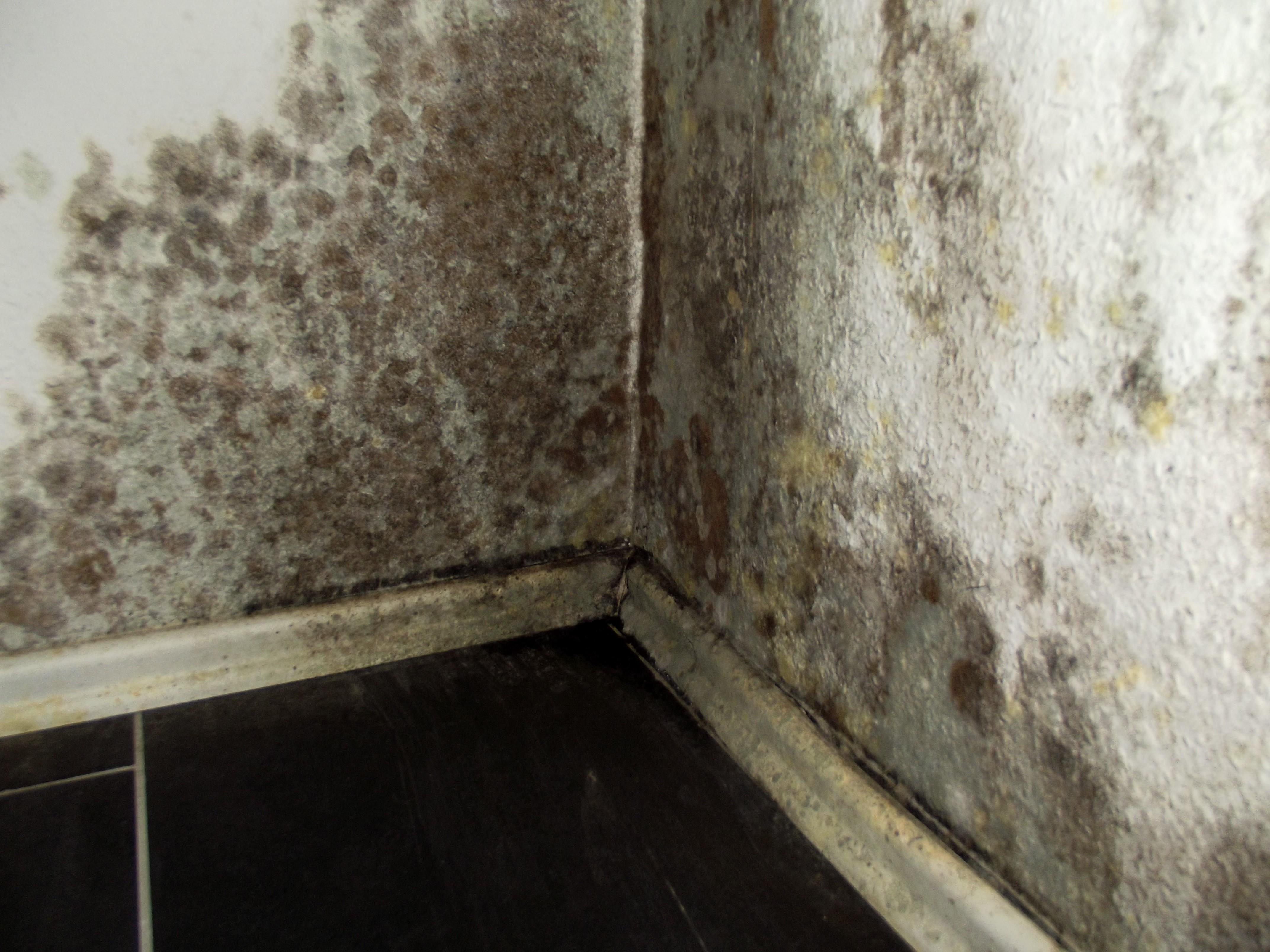 schimmel im wohnzimmer energieberatung becker